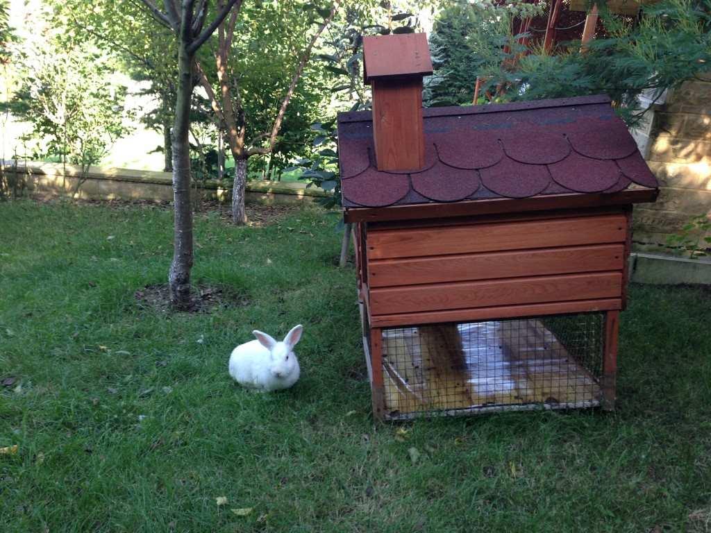 Pelin ve Tavşanı 1