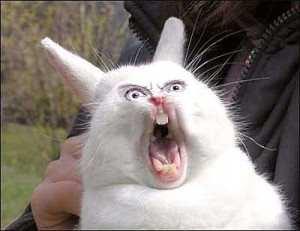 Tavşanların Ses Çıkarması – Bağırması Olayı