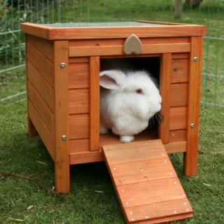 Tavşan Yaşam Alanı Tavsiyeleri