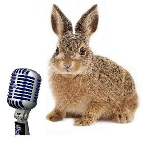 Tavşanlar Ses Çıkartır mı? Tavşan Sesi Nasıldır ?