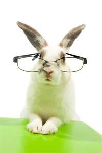 Meraklı zıp zıp tavşan