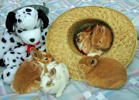 Yavru Tavşan Bakımı