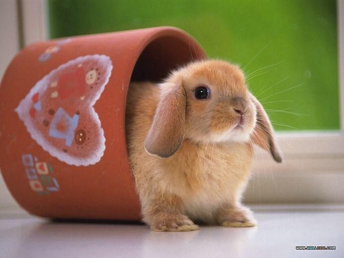 Yavru Tavşan Bakımında Tavşan Sütünün Önemi