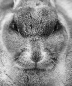 Tavşan Hastalıklarından Korunma Önlemleri – Nasıl Korunulur