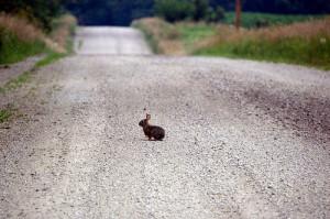 Tavşanlarda Yolculuk Tavşanlar Nasıl Taşınmalı ?