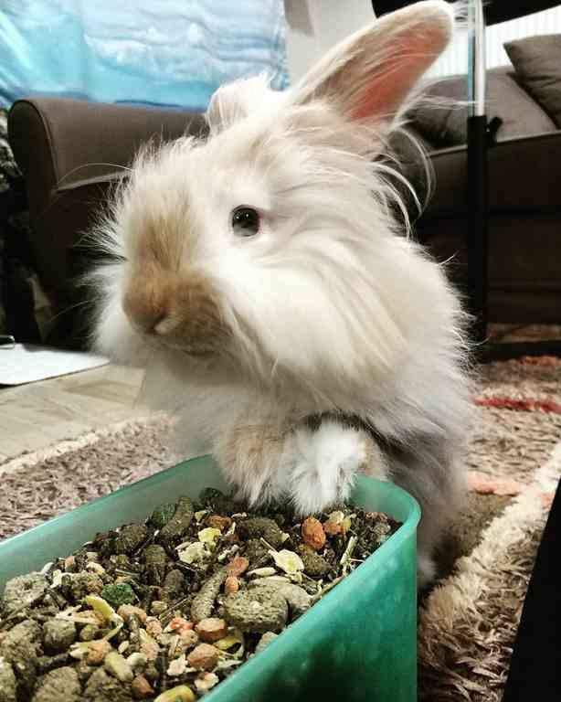 Tavşan Maması Yapımı