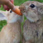 Tavşan ile Arkadaşlık Kurmak için Nasıl Davranmalıyım?