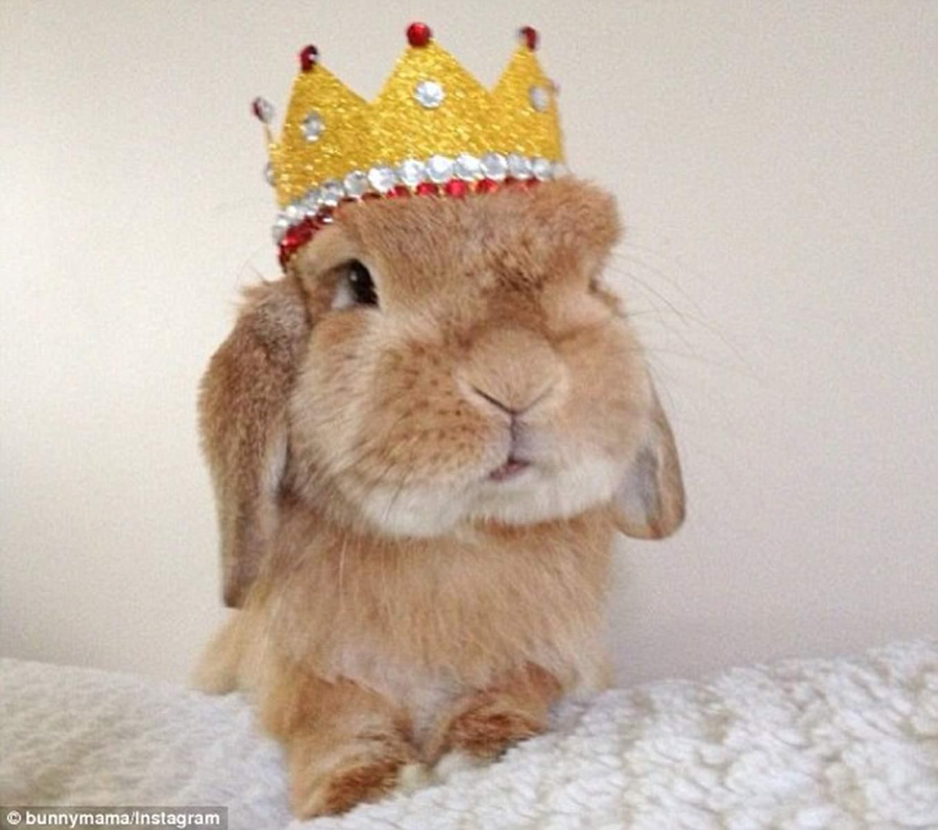 Tavşan Beslemenin FAYDALARI VE ZARARLARI