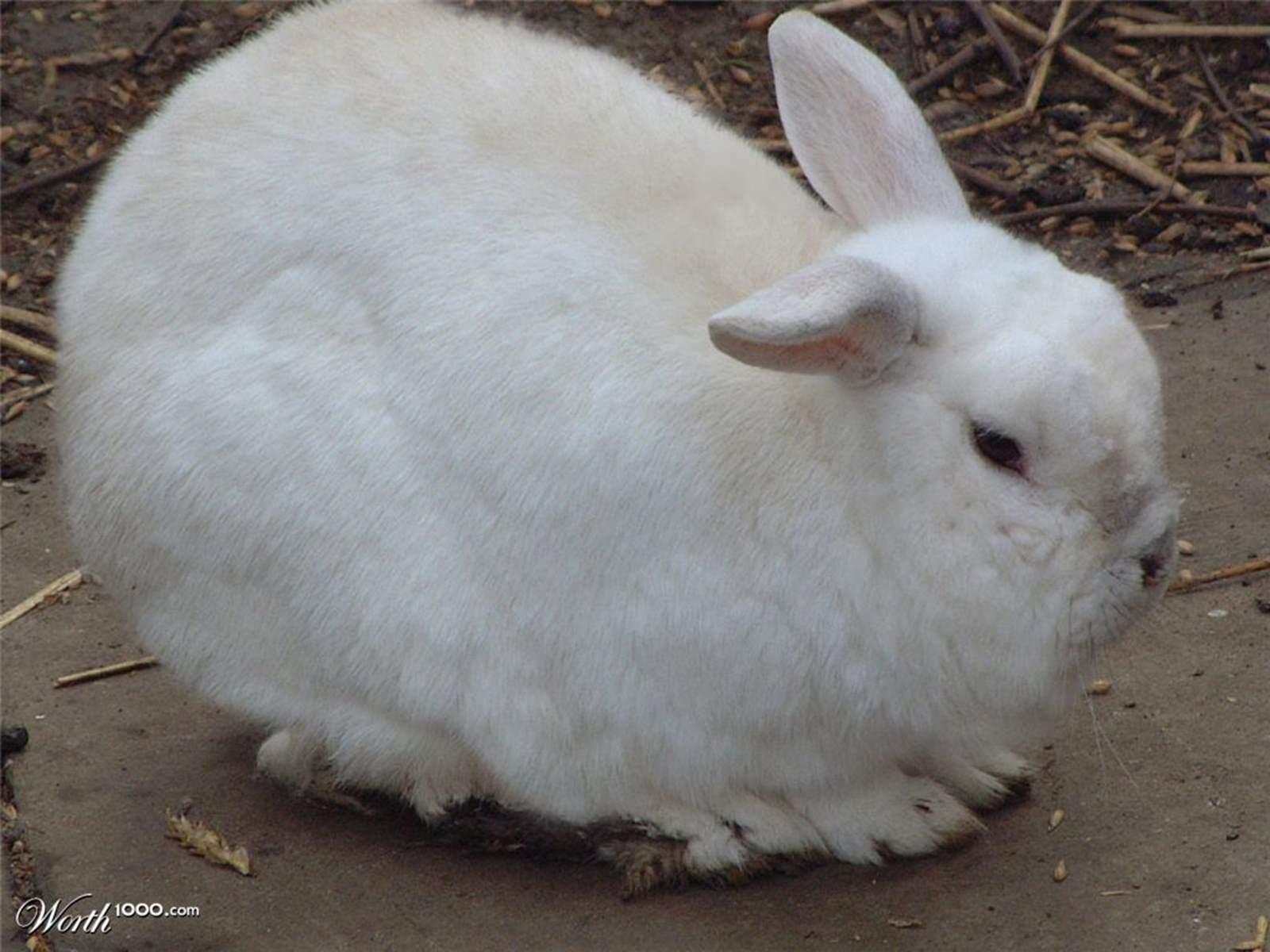 Tavşanlar Nerede Yaşar ? Tavşanlarda Bölgesini Koruma Var mıdır ?