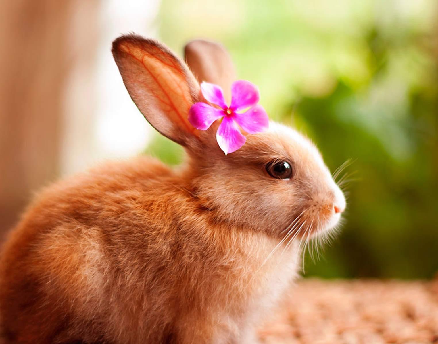 Tavşan Cinsiyeti Nasıl Öğrenilir ?