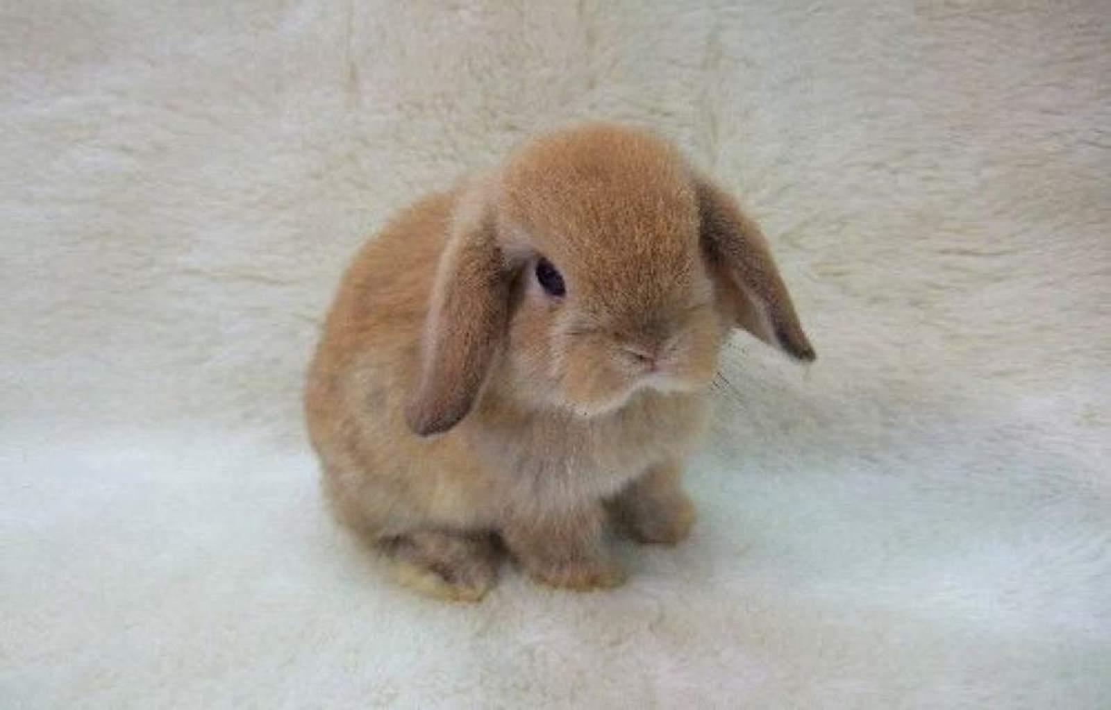 Tavşanlarda İshal Hastalığı ve Tedavisi