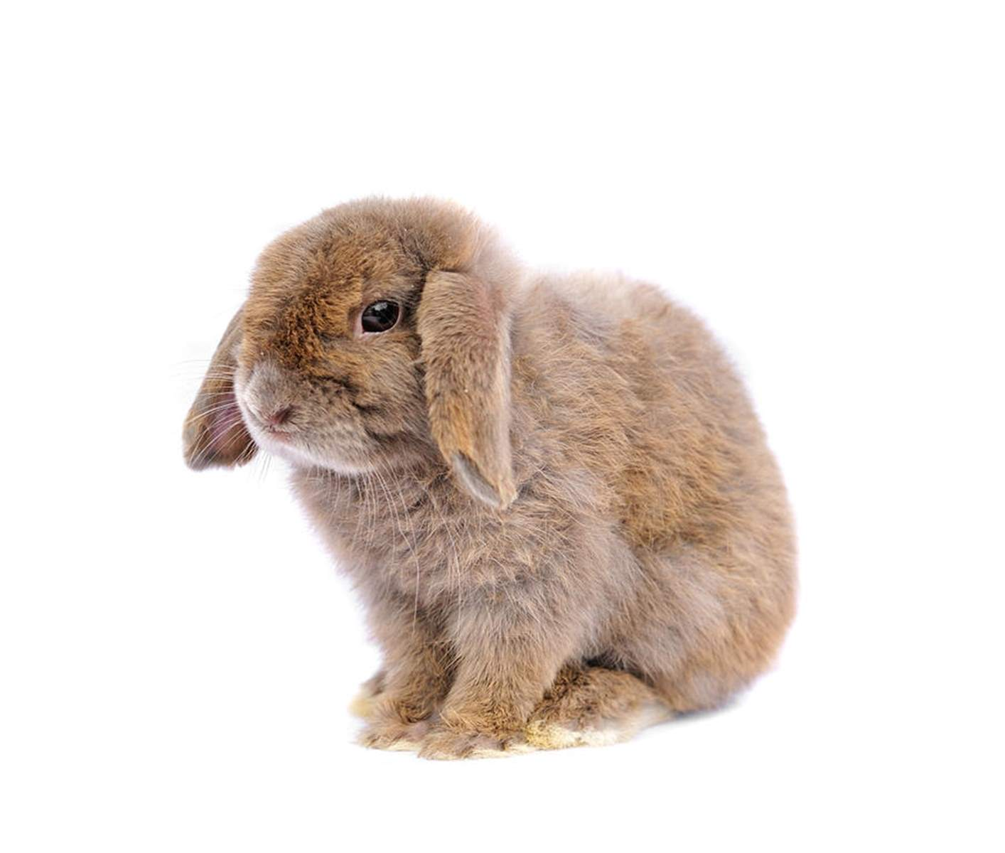 En Sevimli 5 Tavşan Türü