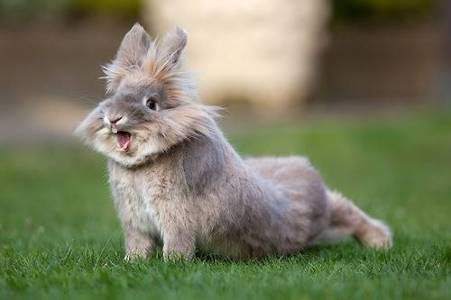Tavşan Resimleri Tavsanlarnet