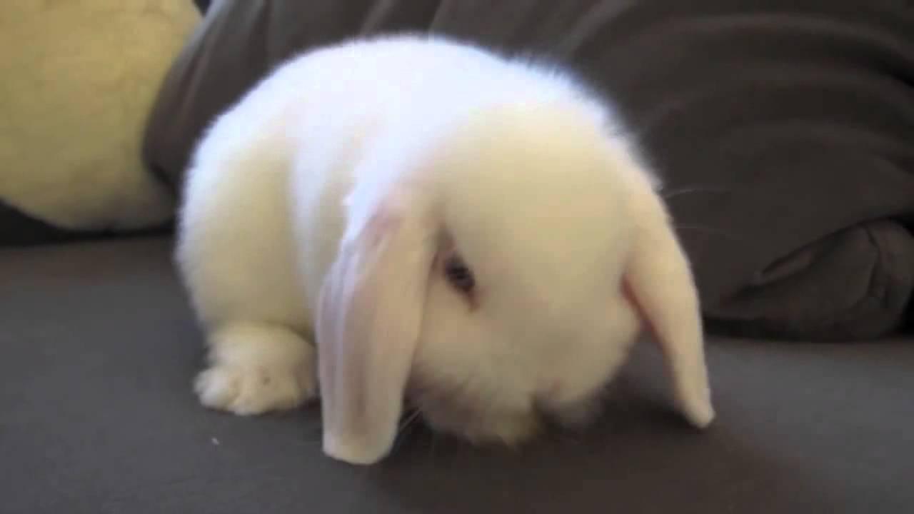 tavşanlar ve ishal