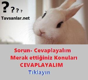 tavşanlar hakkında sorular