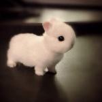 Cüce Tavşanı Hakkında Bilgi ve Besleyeceklere Tavsiyeler