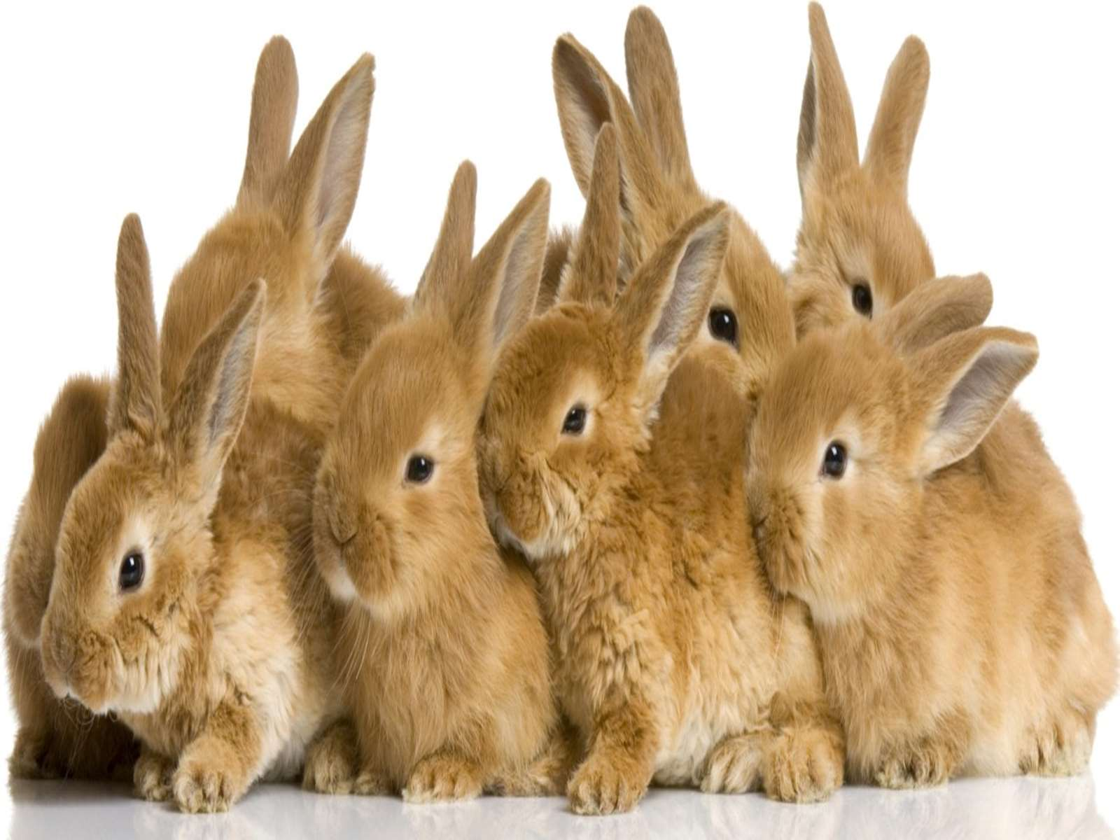 Tavşanlar Türkiyenin En Büyük Tavşan Sitesi Tavşan