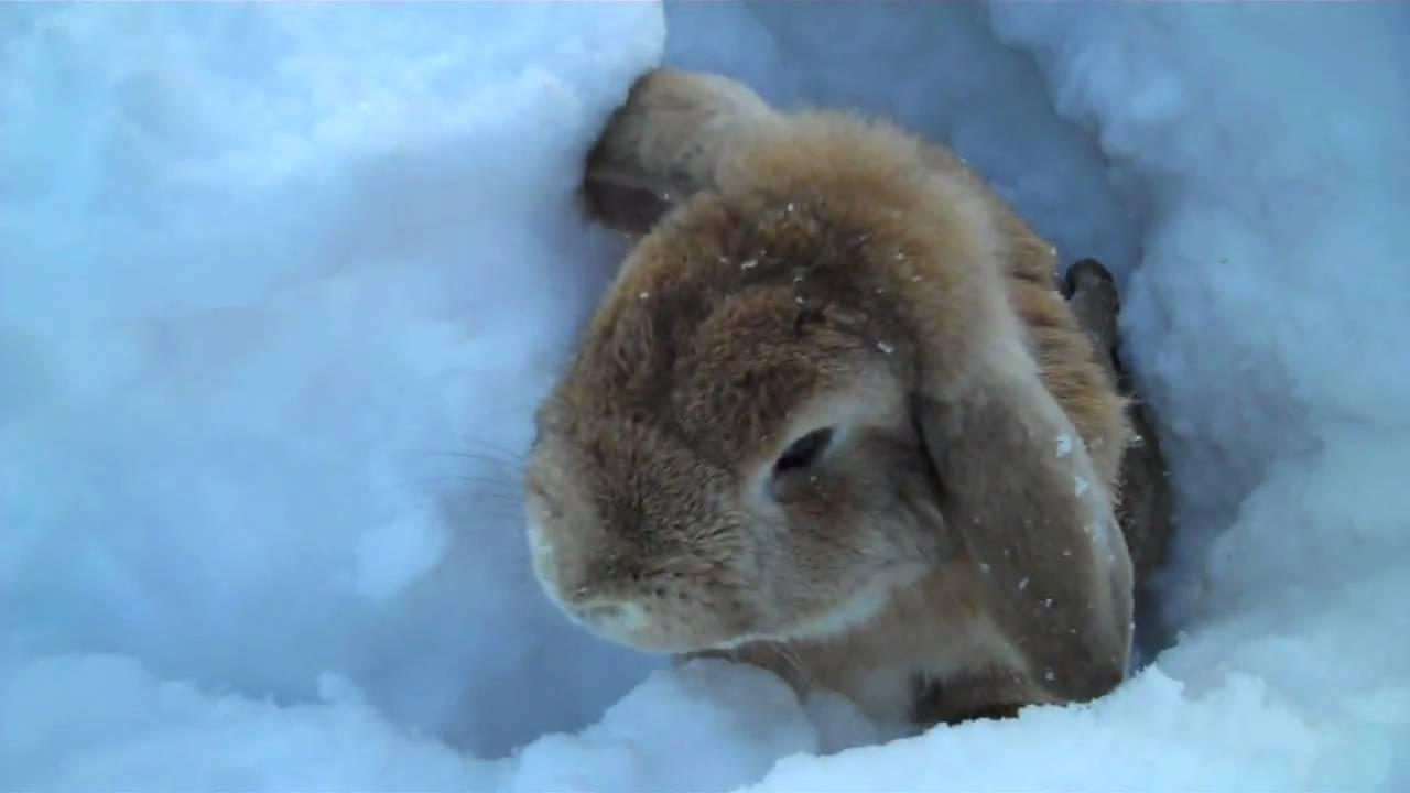 Tavşanın Kar Macerası Videosu