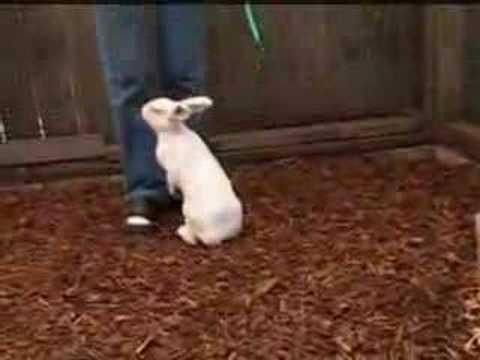 Tavşanların Eğitimi – Tavşanlara Nasıl Eğitim Verilmelidir ?